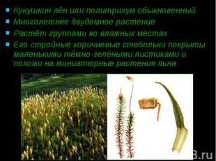 Кукушкин лён или политрихум обыкновенный Кукушкин лён или политрихум обыкновенны