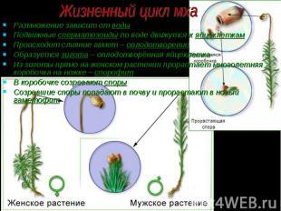 Размножение зависит от воды Размножение зависит от воды Подвижные сперматозоиды