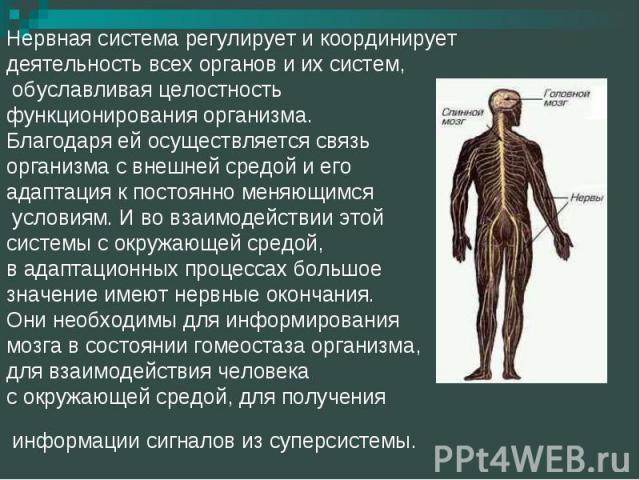 Нервная система регулирует и координирует деятельность всех органов и их систем, обуславливая целостность функционирования организма. Благодаря ей осуществляется связь организма с внешней средой и его адаптация к постоянно меняющимся условиям. И во …