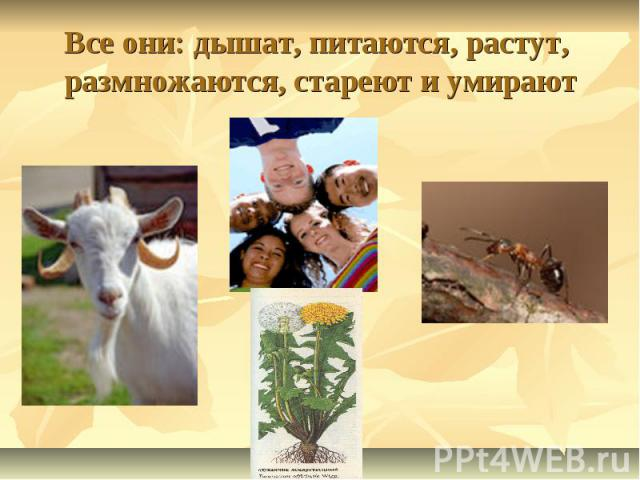 Все они: дышат, питаются, растут, размножаются, стареют и умирают