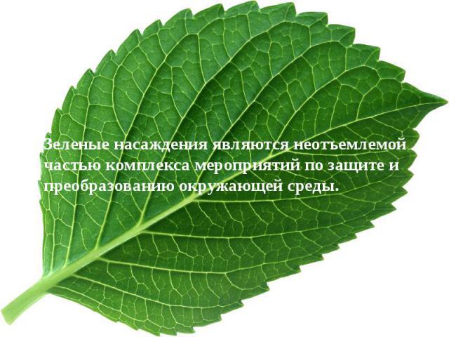 Зеленые насаждения являются неотъемлемой частью комплекса мероприятий по защите и преобразованию окружающей среды. Зеленые насаждения являются неотъемлемой частью комплекса мероприятий по защите и преобразованию окружающей среды.