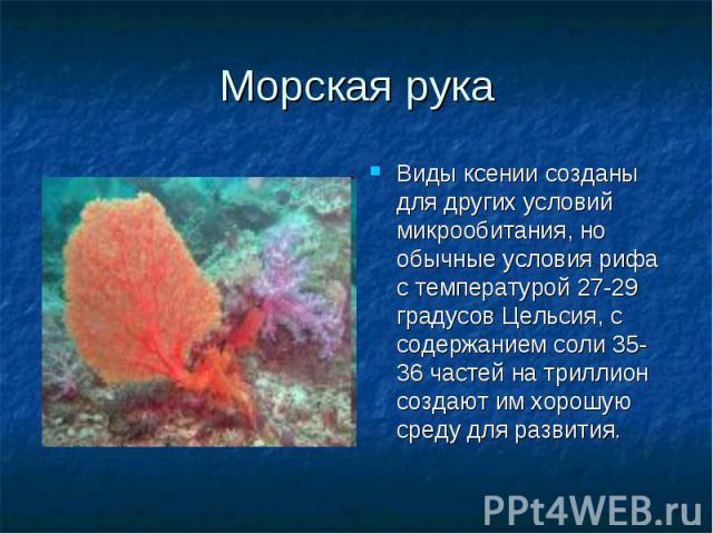 Виды ксении созданы для других условий микрообитания, но обычные условия рифа с температурой 27-29 градусов Цельсия, с содержанием соли 35-36 частей на триллион создают им хорошую среду для развития. Виды ксении созданы для других условий микрообита…