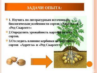 1. Изучить по литературным источникам биологические особенности сортов «Адретта»