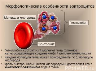 Гемоглобин состоит из 4 молекул гема (сложное железосодержащее соединение)и 4 це