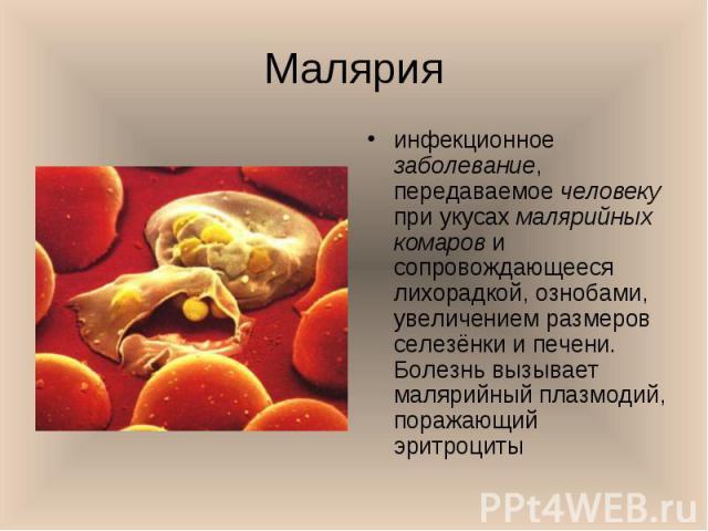 инфекционное заболевание, передаваемое человеку при укусах малярийных комаров и сопровождающееся лихорадкой, ознобами, увеличением размеров селезёнки и печени. Болезнь вызывает малярийный плазмодий, поражающий эритроциты инфекционное заболевание, пе…