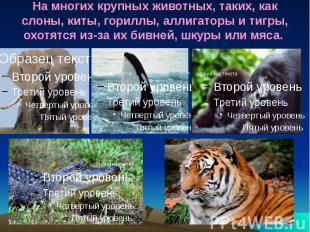 На многих крупных животных, таких, как слоны, киты, гориллы, аллигаторы и тигры,