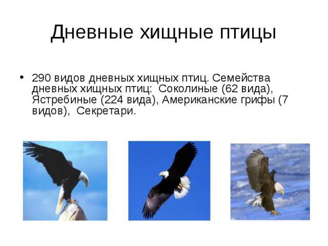 290 видов дневных хищных птиц. Семейства дневных хищных птиц: Соколиные (62 вида), Ястребиные (224 вида), Американские грифы (7 видов), Секретари.