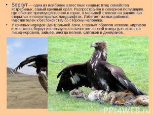 Беркут— одна из наиболее известных хищных птиц семейства ястребиных, самый