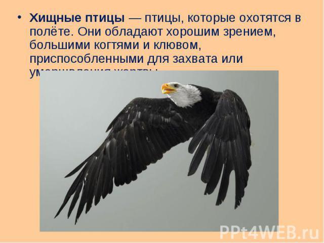 Хищные птицы— птицы, которые охотятся в полёте. Они обладают хорошим зрением, большими когтями и клювом, приспособленными для захвата или умерщвления жертвы. Хищные птицы— птицы, которые охотятся в полёте. Они обладают хорошим зрением, б…