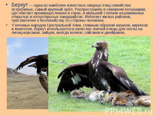 Беркут— одна из наиболее известных хищных птиц семейства ястребиных, самый крупный орёл. Распространён в северном полушарии, где обитает преимущественно в горах, в меньшей степени на равнинных открытых и полуоткрытых ландшафтах. Избегает жилых…