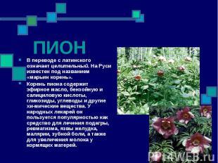 ПИОН В переводе с латинского означает целительный. На Руси известен под название