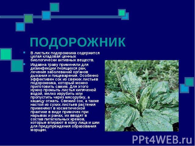ПОДОРОЖНИК В листьях подорожника содержится целая кладовая ценных биологически активных веществ. Издавна траву применяли для дезинфекции гноящихся ран, лечения заболеваний органов дыхания и пищеварения. Особенно эффективен сок из свежих листьев подо…
