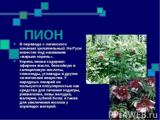 ПИОН В переводе с латинского означает целительный. На Руси известен под названием «марьин корень». Корень пиона содержит эфирное масло, бензойную и салициловую кислоты, гликозиды, углеводы и другие химические вещества. У народных лекарей он пол…