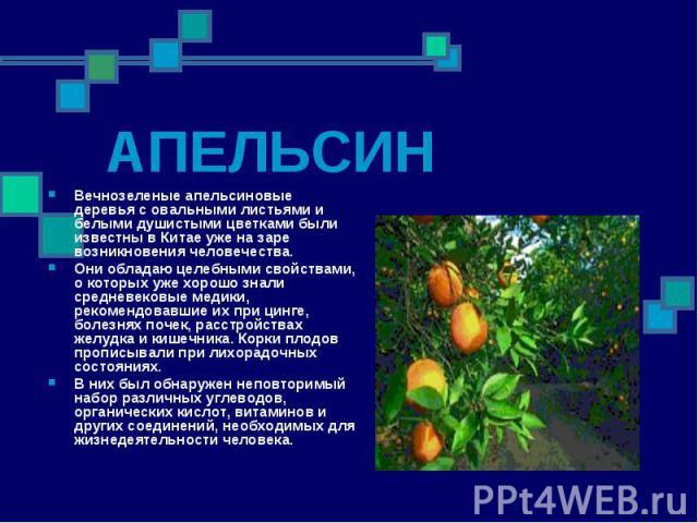АПЕЛЬСИН Вечнозеленые апельсиновые деревья с овальными листьями и белыми душистыми цветками были известны в Китае уже на заре возникновения человечества. Они обладаю целебными свойствами, о которых уже хорошо знали средневековые медики, рекомендовав…