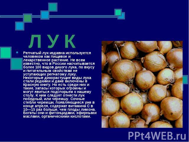 Л У К Репчатый лук издавна используется человеком как пищевое и лекарственное растение. Не всем известно, что в России насчитывается более 100 видов дикого лука, по вкусу и питательным свойствам не уступающих репчатому луку. Некоторые дикорастущие в…