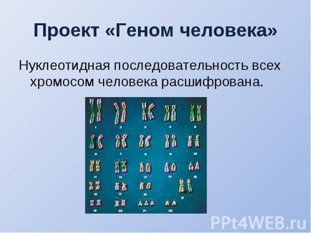 Нуклеотидная последовательность всех хромосом человека расшифрована. Нуклеотидная последовательность всех хромосом человека расшифрована.