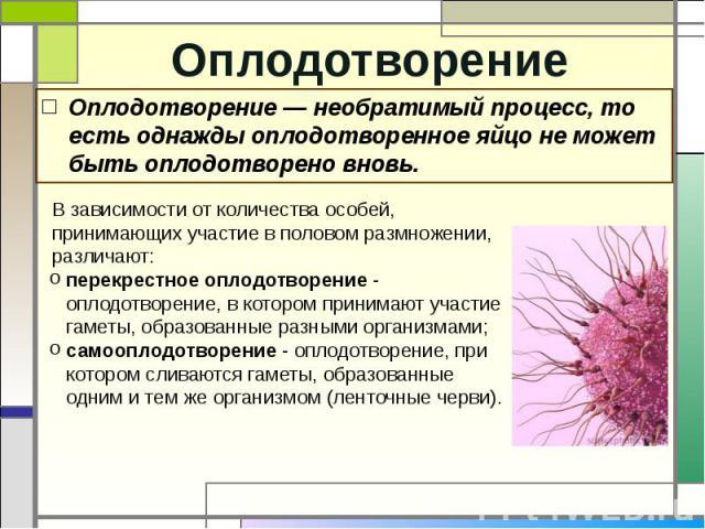Оплодотворение Оплодотворение — необратимый процесс, то есть однажды оплодотворенное яйцо не может быть оплодотворено вновь.