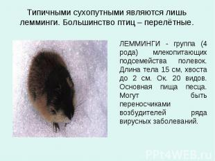 Типичными сухопутными являются лишь лемминги. Большинство птиц – перелётные. ЛЕМ