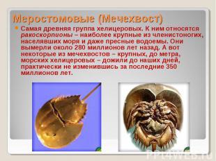 Самая древняя группа хелицеровых. К ним относятся ракоскорпионы – наиболее крупн