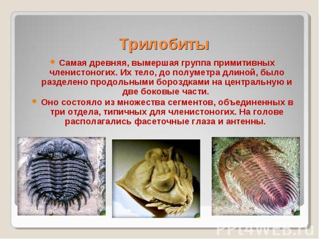 Самая древняя, вымершая группа примитивных членистоногих. Их тело, до полуметра длиной, было разделено продольными бороздками на центральную и две боковые части. Самая древняя, вымершая группа примитивных членистоногих. Их тело, до полуметра длиной,…