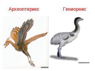 Археоптерикс Гениорнис