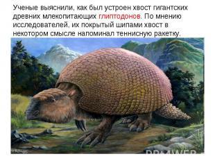 Ученые выяснили, как был устроен хвост гигантских древних млекопитающих глиптодо