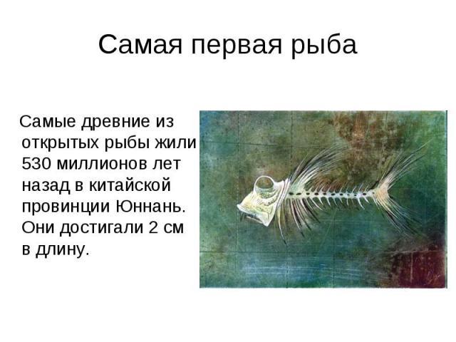 Самая первая рыба Самые древние из открытых рыбы жили 530 миллионов лет назад в китайской провинции Юннань. Они достигали 2 см в длину.