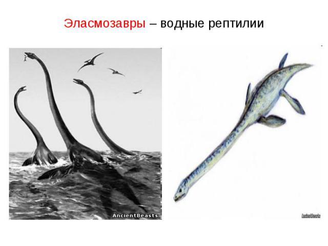 Эласмозавры – водные рептилии
