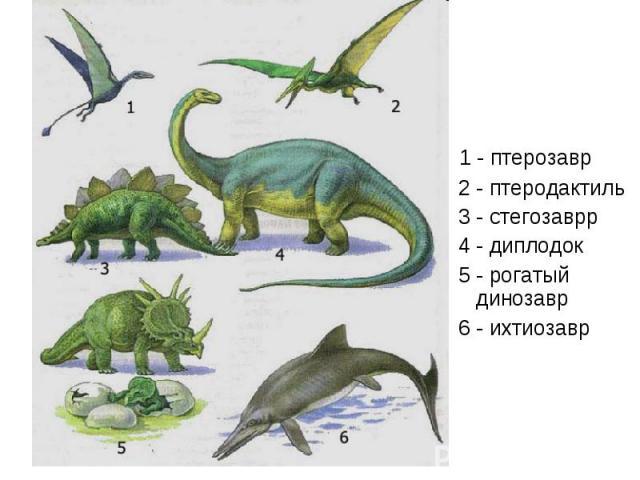 1 - птерозавр 1 - птерозавр 2 - птеродактиль 3 - стегозаврр 4 - диплодок 5 - рогатый динозавр 6 - ихтиозавр