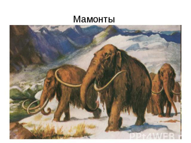 Мамонты