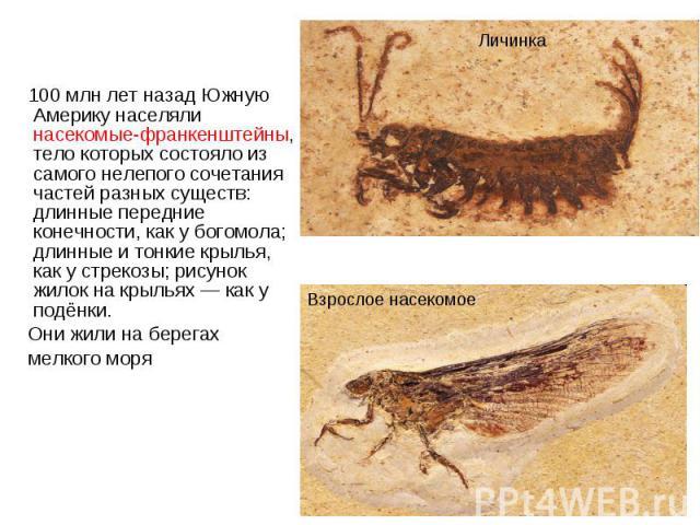 100 млн лет назад Южную Америку населяли насекомые-франкенштейны, тело которых состояло из самого нелепого сочетания частей разных существ: длинные передние конечности, как у богомола; длинные и тонкие крылья, как у стрекозы; рисунок жилок на крылья…