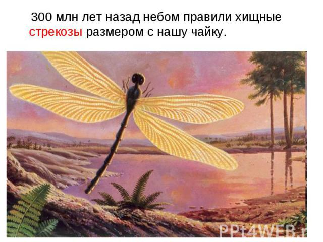 300 млн лет назад небом правили хищные стрекозы размером с нашу чайку. 300 млн лет назад небом правили хищные стрекозы размером с нашу чайку.