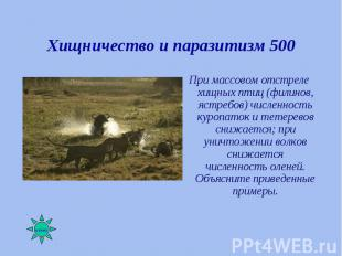 При массовом отстреле хищных птиц (филинов, ястребов) численность куропаток и те