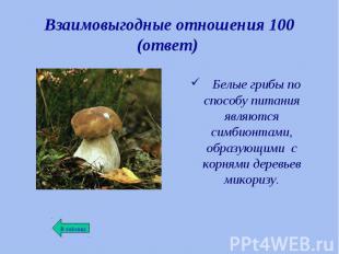 Белые грибы по способу питания являются симбионтами, образующими с корнями дерев