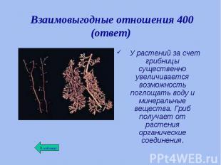 У растений за счет грибницы существенно увеличивается возможность поглощать воду