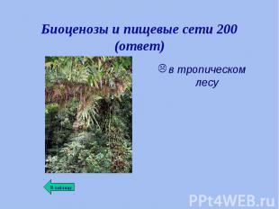 в тропическом лесу в тропическом лесу