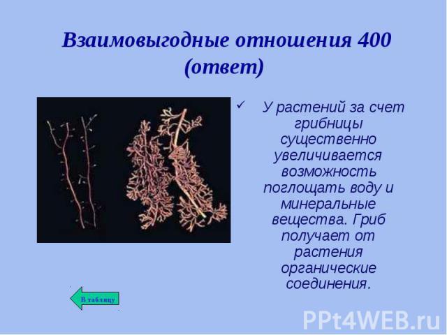 У растений за счет грибницы существенно увеличивается возможность поглощать воду и минеральные вещества. Гриб получает от растения органические соединения. У растений за счет грибницы существенно увеличивается возможность поглощать воду и минеральны…