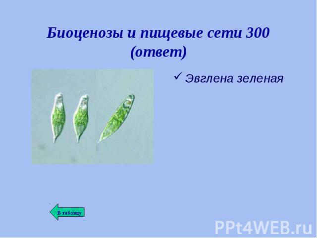 Эвглена зеленая Эвглена зеленая