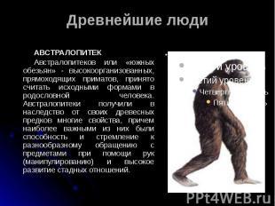 Древнейшие люди АВСТРАЛОПИТЕК Австралопитеков или «южных обезьян» - высокооргани