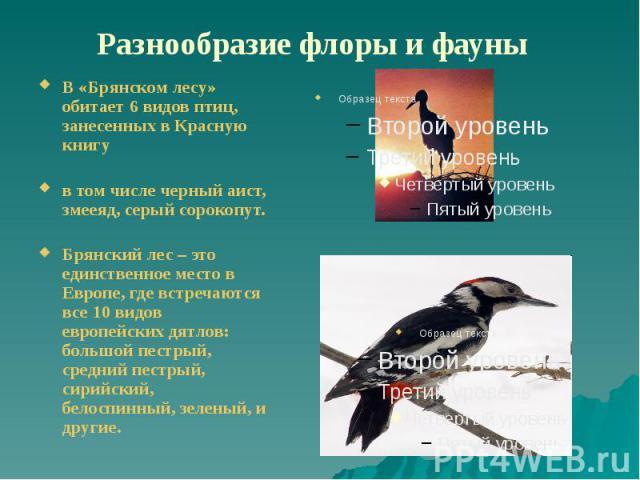 Разнообразие флоры и фауны В «Брянском лесу» обитает 6 видов птиц, занесенных в Красную книгу в том числе черный аист, змееяд, серый сорокопут. Брянский лес – это единственное место в Европе, где встречаются все 10 видов европейских дятлов: большой …