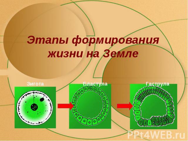 Этапы формирования жизни на Земле
