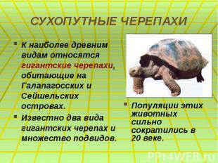 СУХОПУТНЫЕ ЧЕРЕПАХИ К наиболее древним видам относятся гигантские черепахи, обит