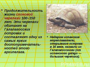 Продолжительность жизни слоновой черепахи 100–150 лет. Эти черепахи обитают на Г