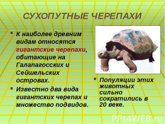 СУХОПУТНЫЕ ЧЕРЕПАХИ К наиболее древним видам относятся гигантские черепахи, обитающие на Галапагосcких и Сейшельских островах. Известно два вида гигантских черепах и множество подвидов.