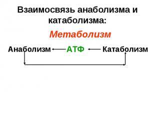 Взаимосвязь анаболизма и катаболизма: Анаболизм Катаболизм