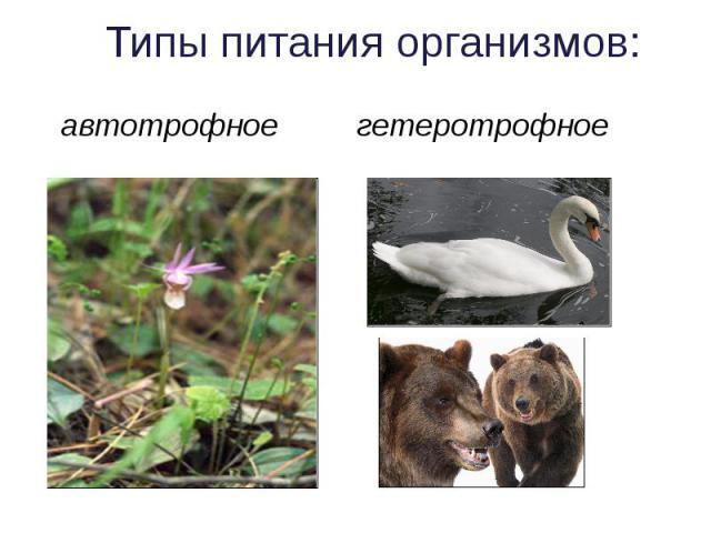Типы питания организмов: