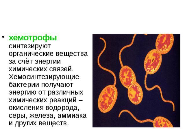 хемотрофы синтезируют органические вещества за счёт энергии химических связей. Хемосинтезирующие бактерии получают энергию от различных химических реакций – окисления водорода, серы, железа, аммиака и других веществ. хемотрофы синтезируют органическ…