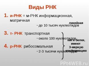 Виды РНК и-РНК = м-РНК информационная, матричная до 10 тысяч нуклеотидов т- РНК