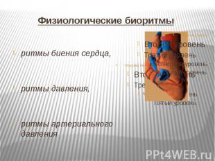 Физиологические биоритмы ритмы биения сердца, ритмы давления, ритмы артериальног