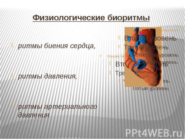 Физиологические биоритмы ритмы биения сердца, ритмы давления, ритмы артериального давления